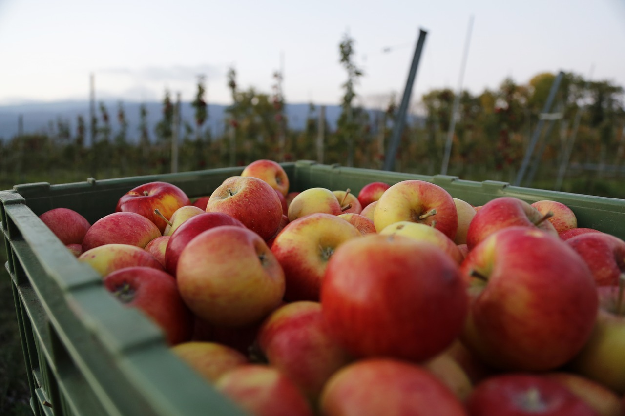 Apples Health Benefits Facts Research Sunlife Superfoods